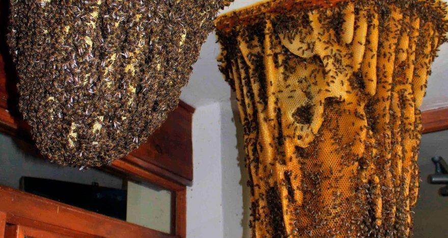 Museo de las Abejas en Ávila